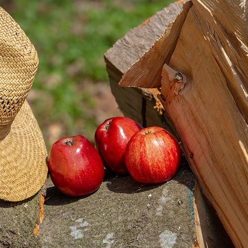 drewno owocowe
